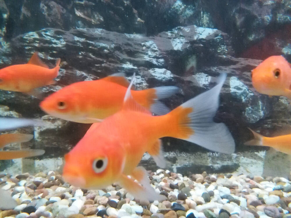 Tropical Or Marine Fish At The Pet Lodge In Eltham London Se9
